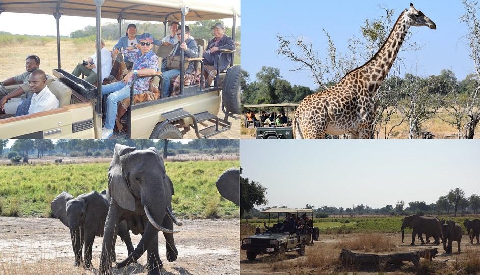 safari_a