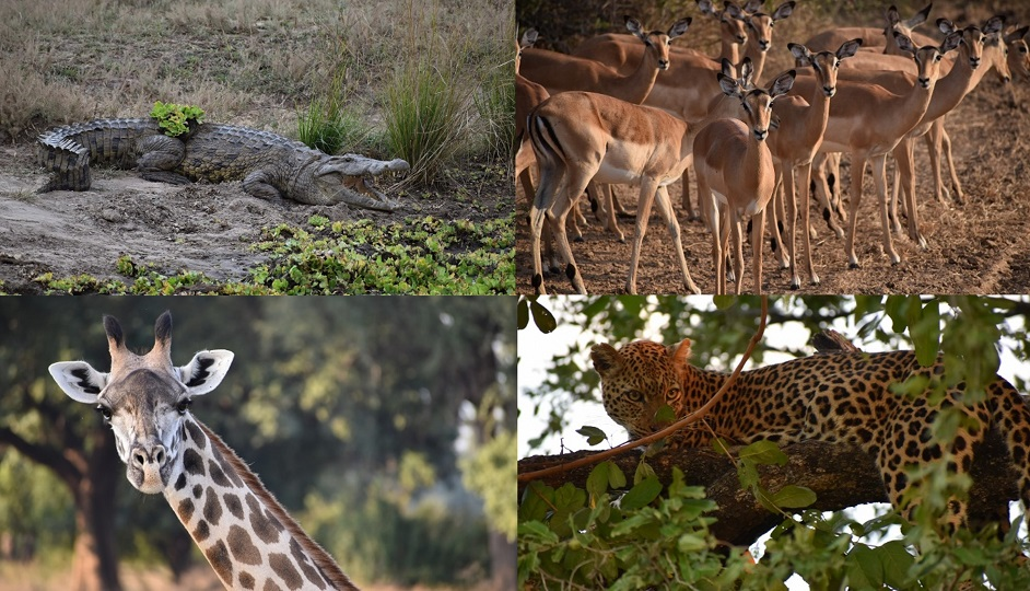 safari_b
