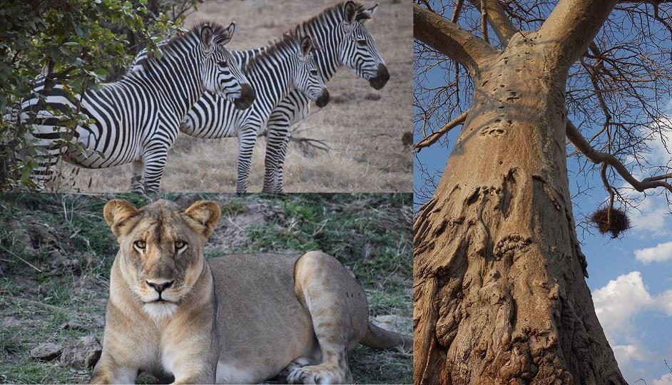 safari_c